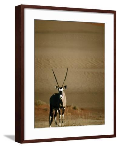 Gemsbok, or South African Oryx ( Oryx Gazella ), in Sand Dunes, Namib Desert Park, Namibia-David Wall-Framed Art Print