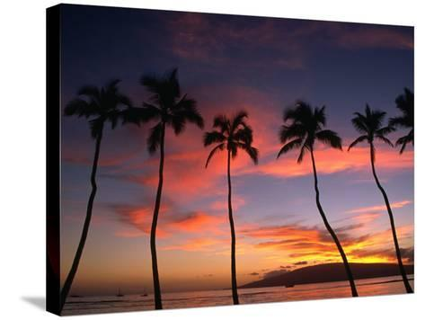 Coconut Palms and the Island of Lanai at Sunset from the Seawall on Front Street, Lahaina, Maui-Karl Lehmann-Stretched Canvas Print