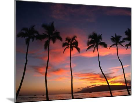 Coconut Palms and the Island of Lanai at Sunset from the Seawall on Front Street, Lahaina, Maui-Karl Lehmann-Mounted Photographic Print