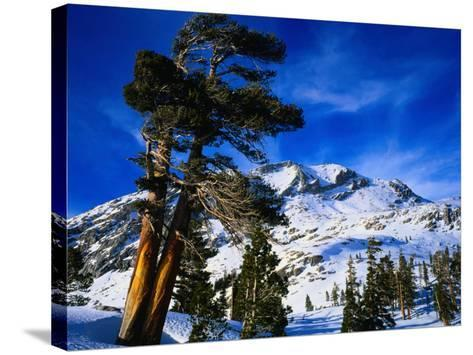 Snow Covered Mountain in Sierra Nevada, California, USA-Rob Blakers-Stretched Canvas Print