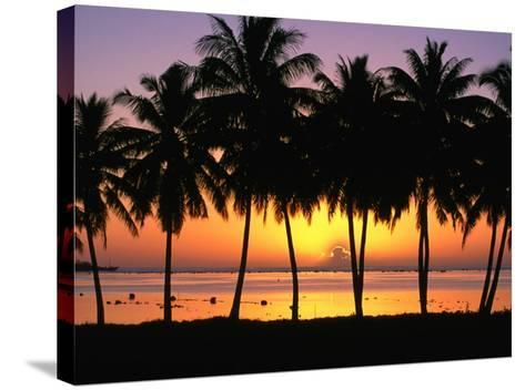 Palm Trees at Sunset, Cook Islands-Peter Hendrie-Stretched Canvas Print