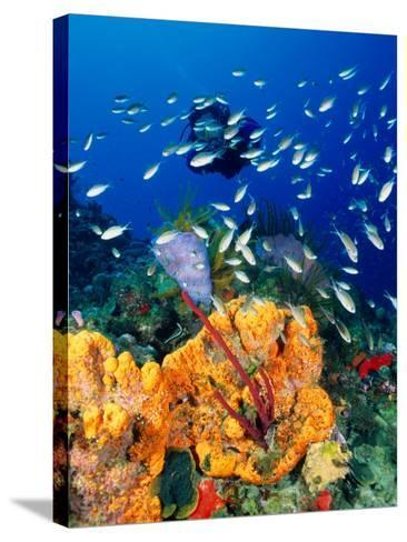 Diving at Barry's Dream Site, Near Mero, Mero, Dominica-Michael Lawrence-Stretched Canvas Print