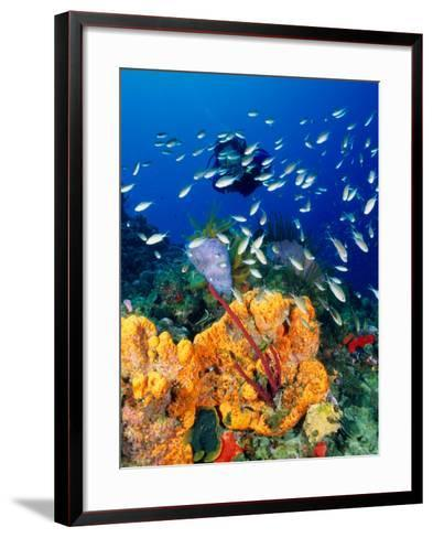 Diving at Barry's Dream Site, Near Mero, Mero, Dominica-Michael Lawrence-Framed Art Print