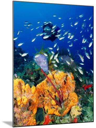 Diving at Barry's Dream Site, Near Mero, Mero, Dominica-Michael Lawrence-Mounted Photographic Print
