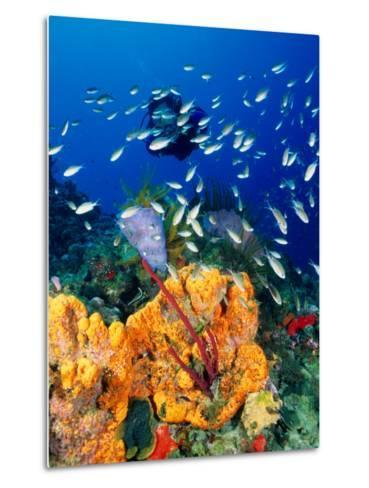 Diving at Barry's Dream Site, Near Mero, Mero, Dominica-Michael Lawrence-Metal Print