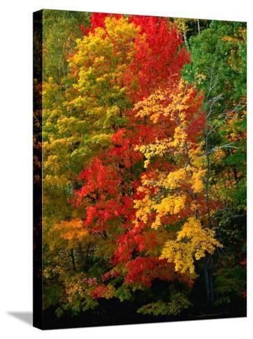 Autumn Colours in Marquette County, USA-Charles Cook-Stretched Canvas Print