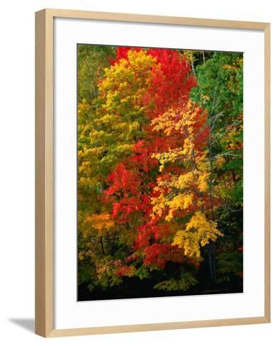 Autumn Colours in Marquette County, USA-Charles Cook-Framed Art Print