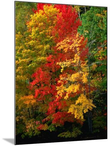 Autumn Colours in Marquette County, USA-Charles Cook-Mounted Photographic Print