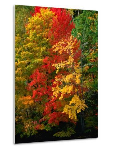 Autumn Colours in Marquette County, USA-Charles Cook-Metal Print