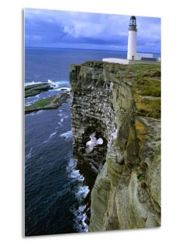 Lighthouse and Cliffs at Noup Head Rspb Reserve, Westray, Orkney Islands, Scotland-Gareth McCormack-Metal Print