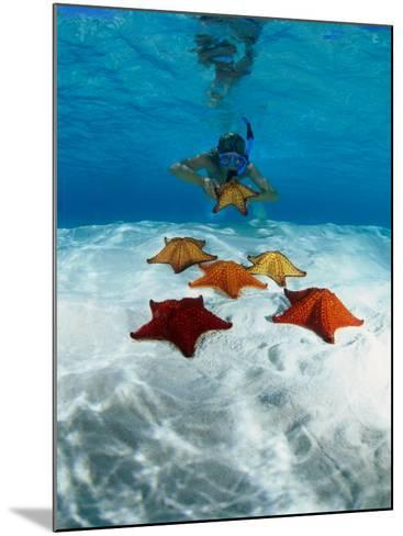 Snorkeller Looking at Cusion Sea Stars Near Marsh Harbour, Marsh Harbour, Bahamas-Michael Lawrence-Mounted Photographic Print