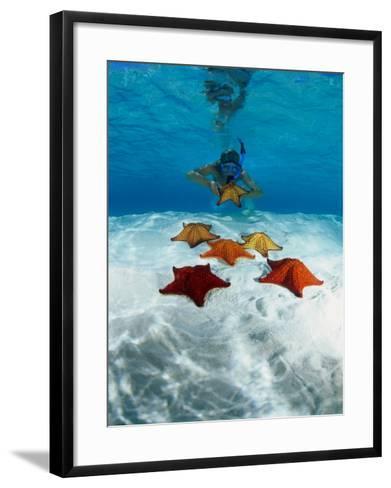 Snorkeller Looking at Cusion Sea Stars Near Marsh Harbour, Marsh Harbour, Bahamas-Michael Lawrence-Framed Art Print