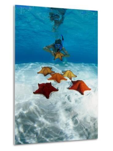 Snorkeller Looking at Cusion Sea Stars Near Marsh Harbour, Marsh Harbour, Bahamas-Michael Lawrence-Metal Print