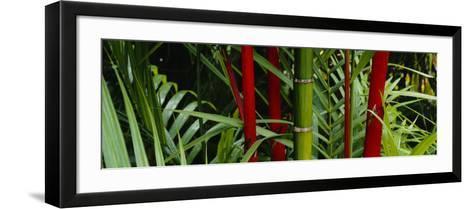 Bamboo Trees, Hawaii, USA--Framed Art Print
