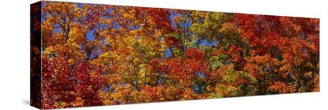 Trees in Adirondack Mountains, New York State, USA--Stretched Canvas Print