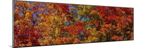 Trees in Adirondack Mountains, New York State, USA--Mounted Photographic Print