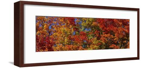 Trees in Adirondack Mountains, New York State, USA--Framed Art Print