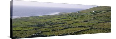 Field, Donegal, Republic of Ireland--Stretched Canvas Print