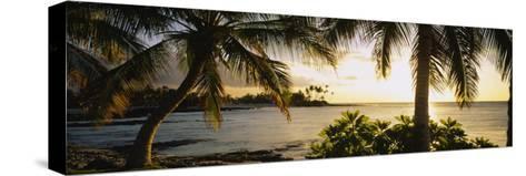 Palm Trees on the Coast, Kohala Coast, Big Island, Hawaii, USA--Stretched Canvas Print