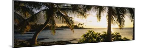 Palm Trees on the Coast, Kohala Coast, Big Island, Hawaii, USA--Mounted Photographic Print