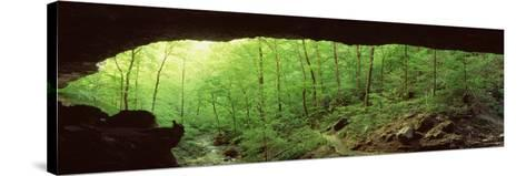 Forest, Cobb Cave, Lost Valley, Ozarks, Arkansas, USA--Stretched Canvas Print