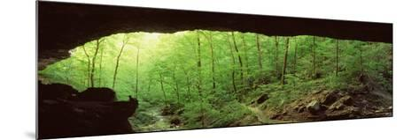 Forest, Cobb Cave, Lost Valley, Ozarks, Arkansas, USA--Mounted Photographic Print