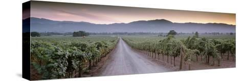 Road in a Vineyard, Napa Valley, California, USA--Stretched Canvas Print