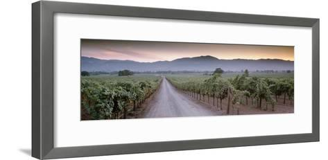 Road in a Vineyard, Napa Valley, California, USA--Framed Art Print