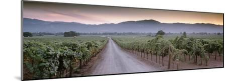Road in a Vineyard, Napa Valley, California, USA--Mounted Photographic Print
