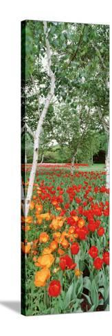 Spring Flowers, Lake Burley Griffin, Australia--Stretched Canvas Print