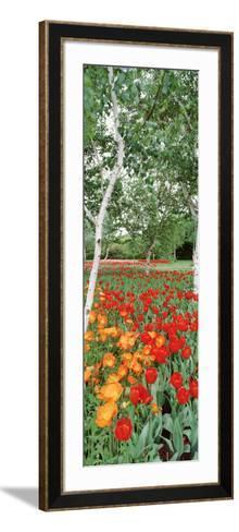 Spring Flowers, Lake Burley Griffin, Australia--Framed Art Print