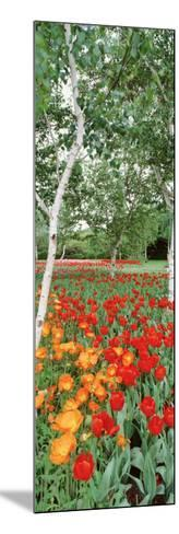 Spring Flowers, Lake Burley Griffin, Australia--Mounted Photographic Print