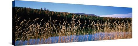 Reflection of Hills on Water, Rainy Lake, Montana, USA--Stretched Canvas Print