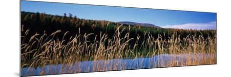 Reflection of Hills on Water, Rainy Lake, Montana, USA--Mounted Photographic Print