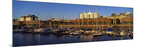Boats Docked at a Harbor, Puerto Madero, Buenos Aires, Argentina--Mounted Photographic Print