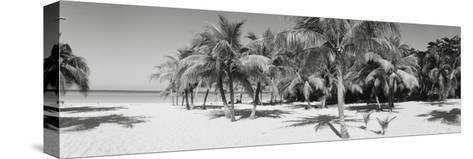Palm Trees on the Beach, Negril, Jamaica--Stretched Canvas Print
