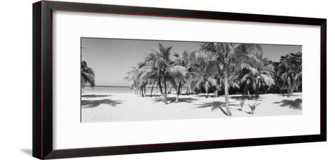 Palm Trees on the Beach, Negril, Jamaica--Framed Art Print