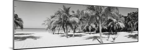 Palm Trees on the Beach, Negril, Jamaica--Mounted Photographic Print
