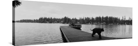 Dog Walking on the Pier, Bellevue, Washington State, USA--Stretched Canvas Print