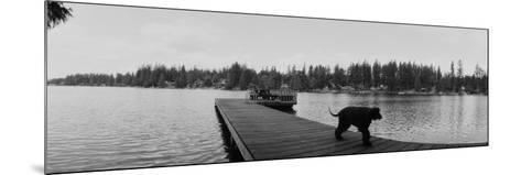 Dog Walking on the Pier, Bellevue, Washington State, USA--Mounted Photographic Print