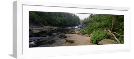 Stream of Water Flowing through a Forest, Swallow Falls State Park, Maryland, USA--Framed Art Print