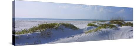 Grass on the Beach, Lido Beach, Lido Key, Sarasota, Florida, USA--Stretched Canvas Print