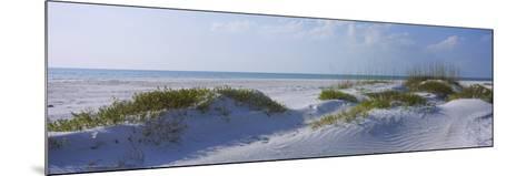 Grass on the Beach, Lido Beach, Lido Key, Sarasota, Florida, USA--Mounted Photographic Print
