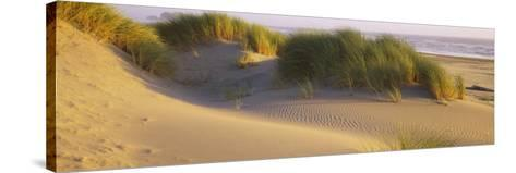 Grass on the Beach, Pacific Ocean, Boardman State Park, Oregon, USA--Stretched Canvas Print