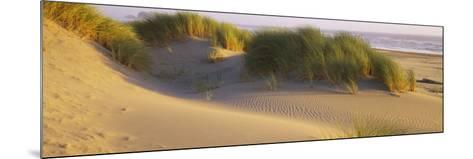 Grass on the Beach, Pacific Ocean, Boardman State Park, Oregon, USA--Mounted Photographic Print