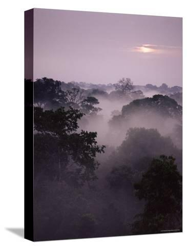 Dawn Over Canopy of Tai Forest, Cote D'Ivoire, West Africa-Michael W^ Richards-Stretched Canvas Print