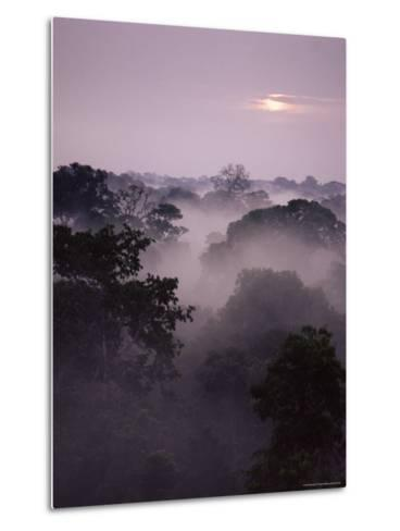 Dawn Over Canopy of Tai Forest, Cote D'Ivoire, West Africa-Michael W^ Richards-Metal Print