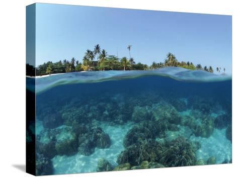 Split-Level Shot of Coral Reef and Shore, Phillippines-Jurgen Freund-Stretched Canvas Print