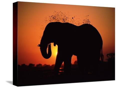 African Elephant Dusting Itself at Dusk, Chobe National Park, Botswana, Southern Africa-Tony Heald-Stretched Canvas Print