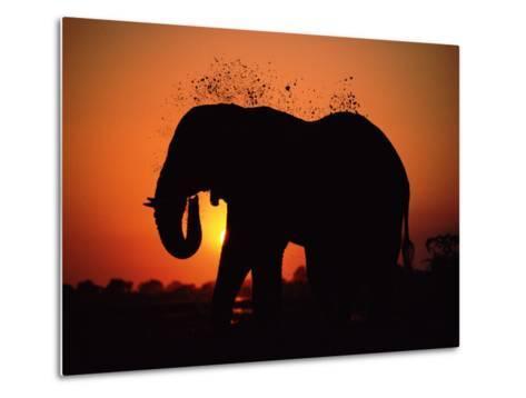 African Elephant Dusting Itself at Dusk, Chobe National Park, Botswana, Southern Africa-Tony Heald-Metal Print